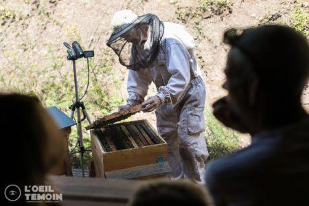 L'Arc en Miel : visite-immersion au coeur du monde des abeilles