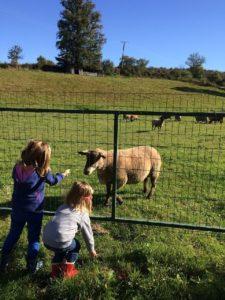 Moutons, dans notre village